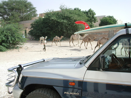 Camels and car.jpg