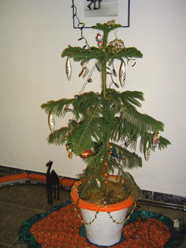 o-christmas-tree.jpg