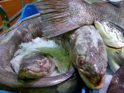 mmmfish