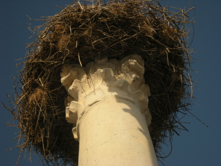 stork nest on pillar