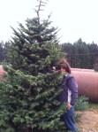 e and tree
